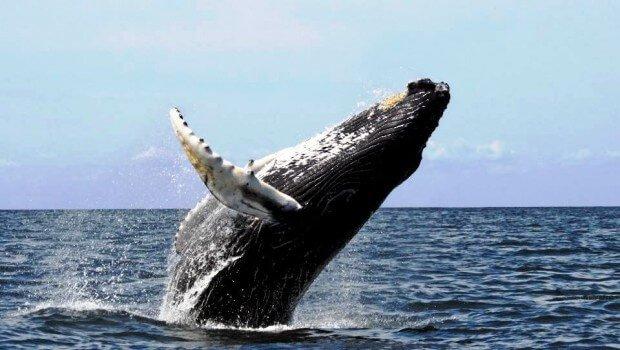 baleine afrique du sud