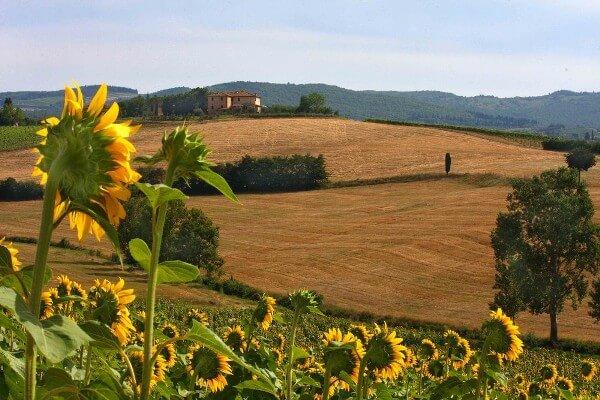 Merveilleuse-Toscane-a18485893