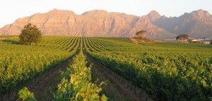 vin afrique du sud