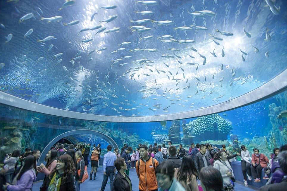 plus grand aquarium
