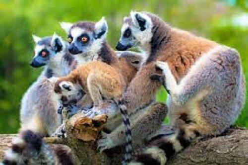 Madagascar voyage les muriens