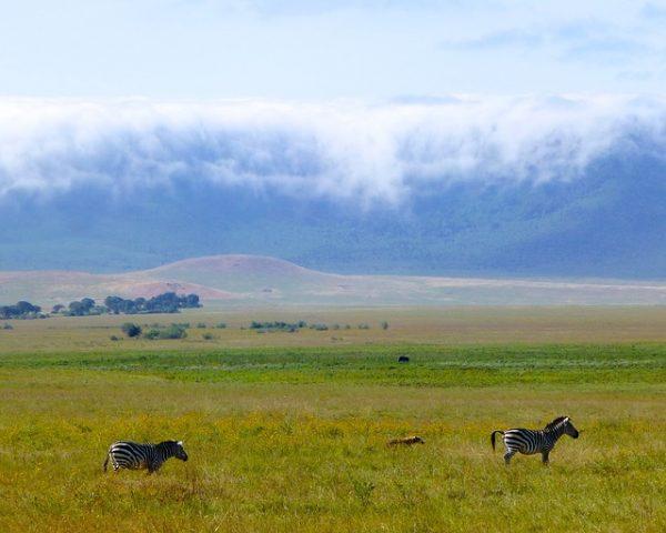 Quand partir en voyage en Tanzanie?